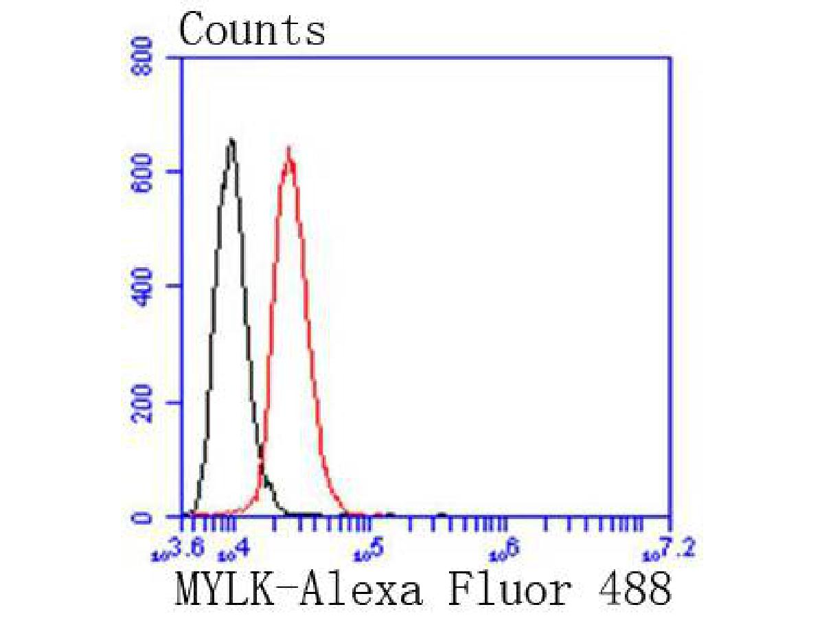 Flow cytometric analysis of Myosin light chain kinase was done on SH-SY5Y cells. The cells were fixed, permeabilized and stained with the primary antibody (ET1608-68, 1/50) (red). After incubation of the primary antibody at room temperature for an hour, the cells were stained with a Alexa Fluor 488-conjugated Goat anti-Rabbit IgG Secondary antibody at 1/1000 dilution for 30 minutes.Unlabelled sample was used as a control (cells without incubation with primary antibody; black).