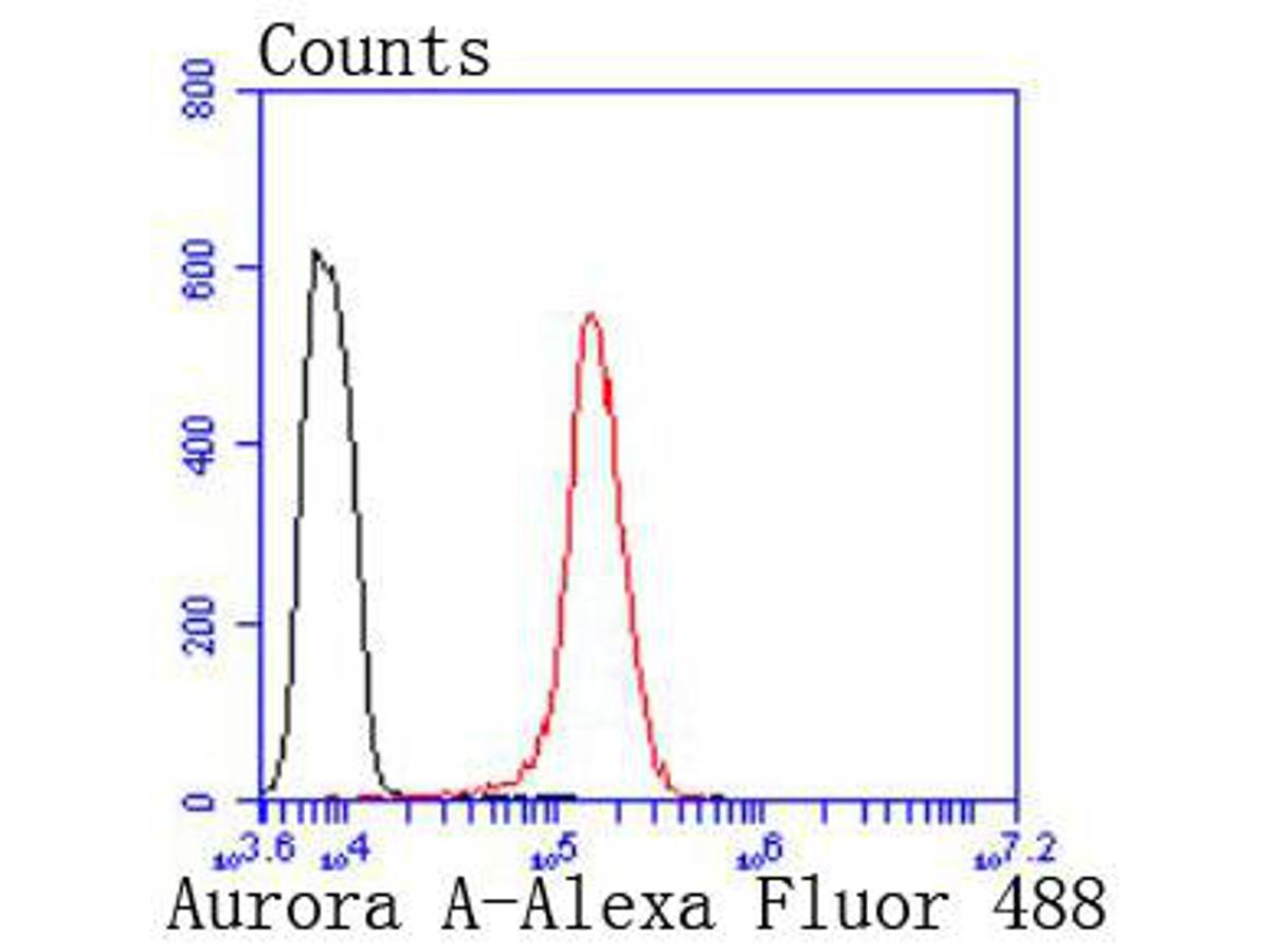 Flow cytometric analysis of Aurora A was done on Hela cells. The cells were fixed, permeabilized and stained with the primary antibody (ET1609-22, 1/50) (red). After incubation of the primary antibody at room temperature for an hour, the cells were stained with a Alexa Fluor 488-conjugated Goat anti-Rabbit IgG Secondary antibody at 1/1000 dilution for 30 minutes.Unlabelled sample was used as a control (cells without incubation with primary antibody; black).