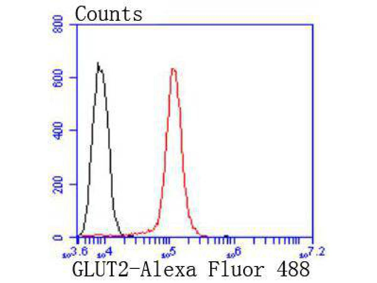 Flow cytometric analysis of GLUT2 was done on HepG2 cells. The cells were fixed, permeabilized and stained with the primary antibody (ET1701-34, 1/50) (red). After incubation of the primary antibody at room temperature for an hour, the cells were stained with a Alexa Fluor 488-conjugated Goat anti-Rabbit IgG Secondary antibody at 1/1000 dilution for 30 minutes.Unlabelled sample was used as a control (cells without incubation with primary antibody; black).