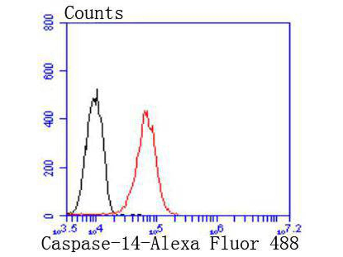 Flow cytometric analysis of Caspase-14 was done on A431 cells. The cells were fixed, permeabilized and stained with the primary antibody (ET1701-52, 1/50) (red). After incubation of the primary antibody at room temperature for an hour, the cells were stained with a Alexa Fluor 488-conjugated Goat anti-Rabbit IgG Secondary antibody at 1/1000 dilution for 30 minutes.Unlabelled sample was used as a control (cells without incubation with primary antibody; black).