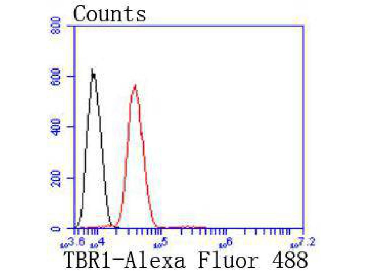 Flow cytometric analysis of TBR1 was done on SH-SY5Y cells. The cells were fixed, permeabilized and stained with the primary antibody (ET1702-97, 1/50) (red). After incubation of the primary antibody at room temperature for an hour, the cells were stained with a Alexa Fluor 488-conjugated Goat anti-Rabbit IgG Secondary antibody at 1/1000 dilution for 30 minutes.Unlabelled sample was used as a control (cells without incubation with primary antibody; black).