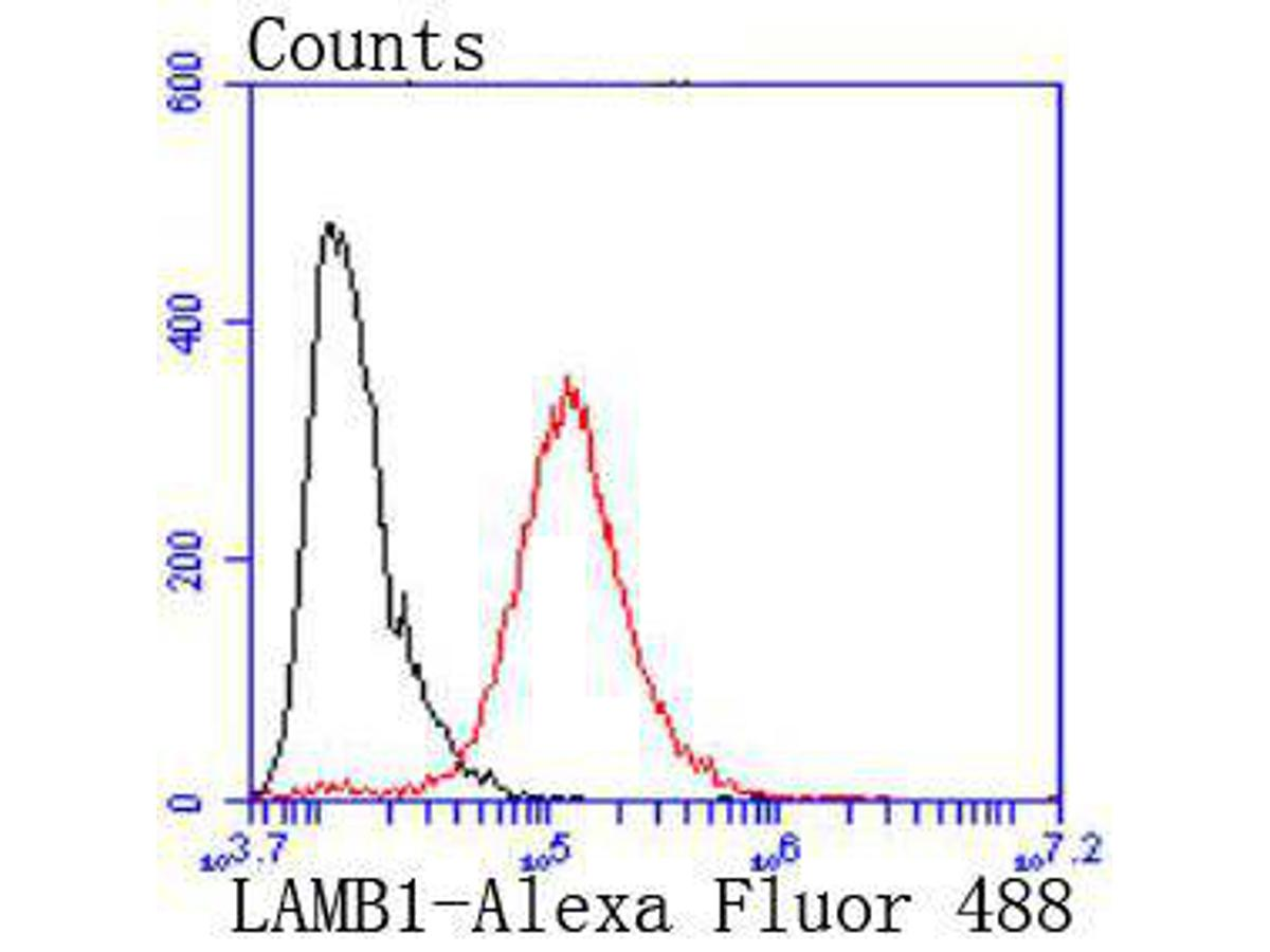 Flow cytometric analysis of Laminin beta 1 was done on A431 cells. The cells were fixed, permeabilized and stained with the primary antibody (ET1703-14, 1/50) (red). After incubation of the primary antibody at room temperature for an hour, the cells were stained with a Alexa Fluor 488-conjugated Goat anti-Rabbit IgG Secondary antibody at 1/1000 dilution for 30 minutes.Unlabelled sample was used as a control (cells without incubation with primary antibody; black).