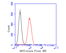 Flow cytometric analysis of GOT2 was done on SiHa cells. The cells were fixed, permeabilized and stained with the primary antibody (ET7110-71, 1/50) (red). After incubation of the primary antibody at room temperature for an hour, the cells were stained with a Alexa Fluor 488-conjugated Goat anti-Rabbit IgG Secondary antibody at 1/1000 dilution for 30 minutes.Unlabelled sample was used as a control (cells without incubation with primary antibody; black).