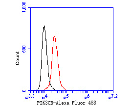 Flow cytometric analysis of PI3-kinase p110 subunit beta was done on Hela cells. The cells were fixed, permeabilized and stained with the primary antibody (ET1610-36, 1/50) (red). After incubation of the primary antibody at room temperature for an hour, the cells were stained with a Alexa Fluor 488-conjugated Goat anti-Rabbit IgG Secondary antibody at 1/1000 dilution for 30 minutes.Unlabelled sample was used as a control (cells without incubation with primary antibody; black).