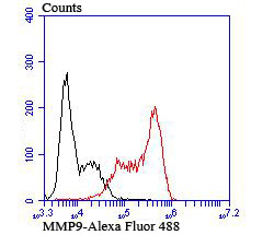 Flow cytometric analysis of MMP9 was done on HL-60 cells. The cells were fixed, permeabilized and stained with the primary antibody (ER1706-40, 1/50) (red). After incubation of the primary antibody at room temperature for an hour, the cells were stained with a Alexa Fluor 488-conjugated Goat anti-Rabbit IgG Secondary antibody at 1/1000 dilution for 30 minutes.Unlabelled sample was used as a control (cells without incubation with primary antibody; black).