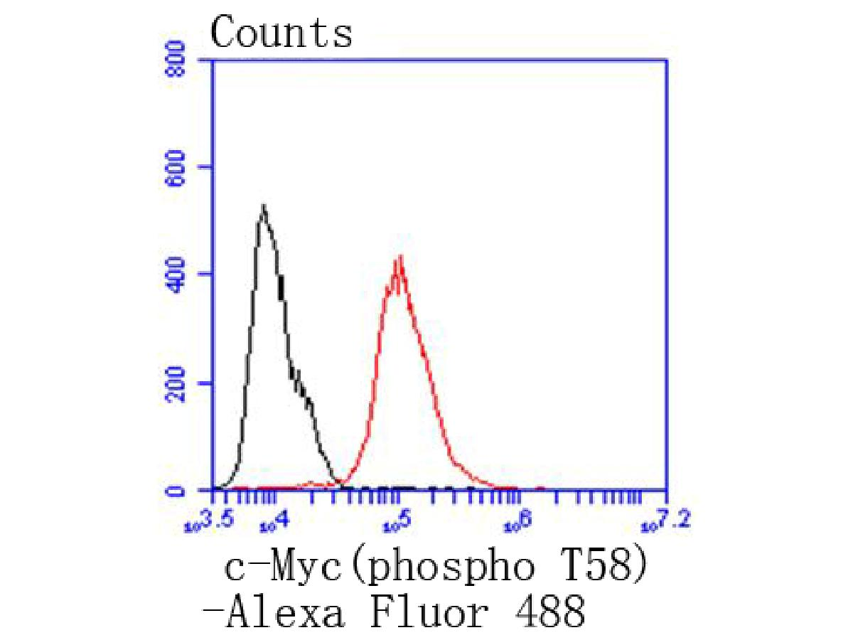 Flow cytometric analysis of Phospho-c-Myc(T58) was done on MCF-7 cells. The cells were fixed, permeabilized and stained with the primary antibody (ET1611-24, 1/50) (red). After incubation of the primary antibody at room temperature for an hour, the cells were stained with a Alexa Fluor 488-conjugated Goat anti-Rabbit IgG Secondary antibody at 1/1000 dilution for 30 minutes.Unlabelled sample was used as a control (cells without incubation with primary antibody; black).