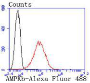 Flow cytometric analysis of AMPK beta 1 was done on A431 cells. The cells were fixed, permeabilized and stained with the primary antibody (ET1612-56, 1/50) (red). After incubation of the primary antibody at room temperature for an hour, the cells were stained with a Alexa Fluor 488-conjugated Goat anti-Rabbit IgG Secondary antibody at 1/1000 dilution for 30 minutes.Unlabelled sample was used as a control (cells without incubation with primary antibody; black).