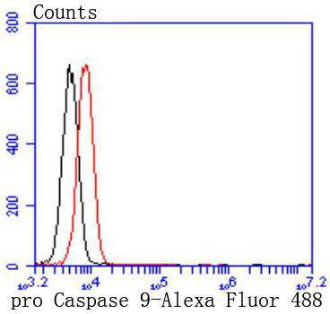 Flow cytometric analysis of Jurkat cells with pro Caspase 9 antibody at 1/50 dilution (red) compared with an unlabelled control (cells without incubation with primary antibody; black). Alexa Fluor 488-conjugated goat anti rabbit IgG was used as the secondary antibody