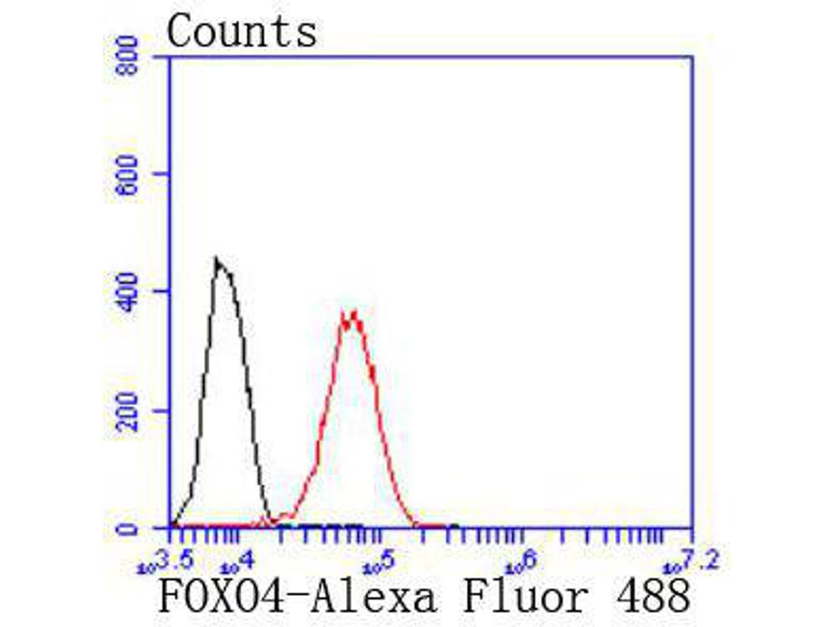 Flow cytometric analysis of FOXO4 was done on 293 cells. The cells were fixed, permeabilized and stained with the primary antibody (ET1701-67, 1/50) (red). After incubation of the primary antibody at room temperature for an hour, the cells were stained with a Alexa Fluor 488-conjugated Goat anti-Rabbit IgG Secondary antibody at 1/1000 dilution for 30 minutes.Unlabelled sample was used as a control (cells without incubation with primary antibody; black).