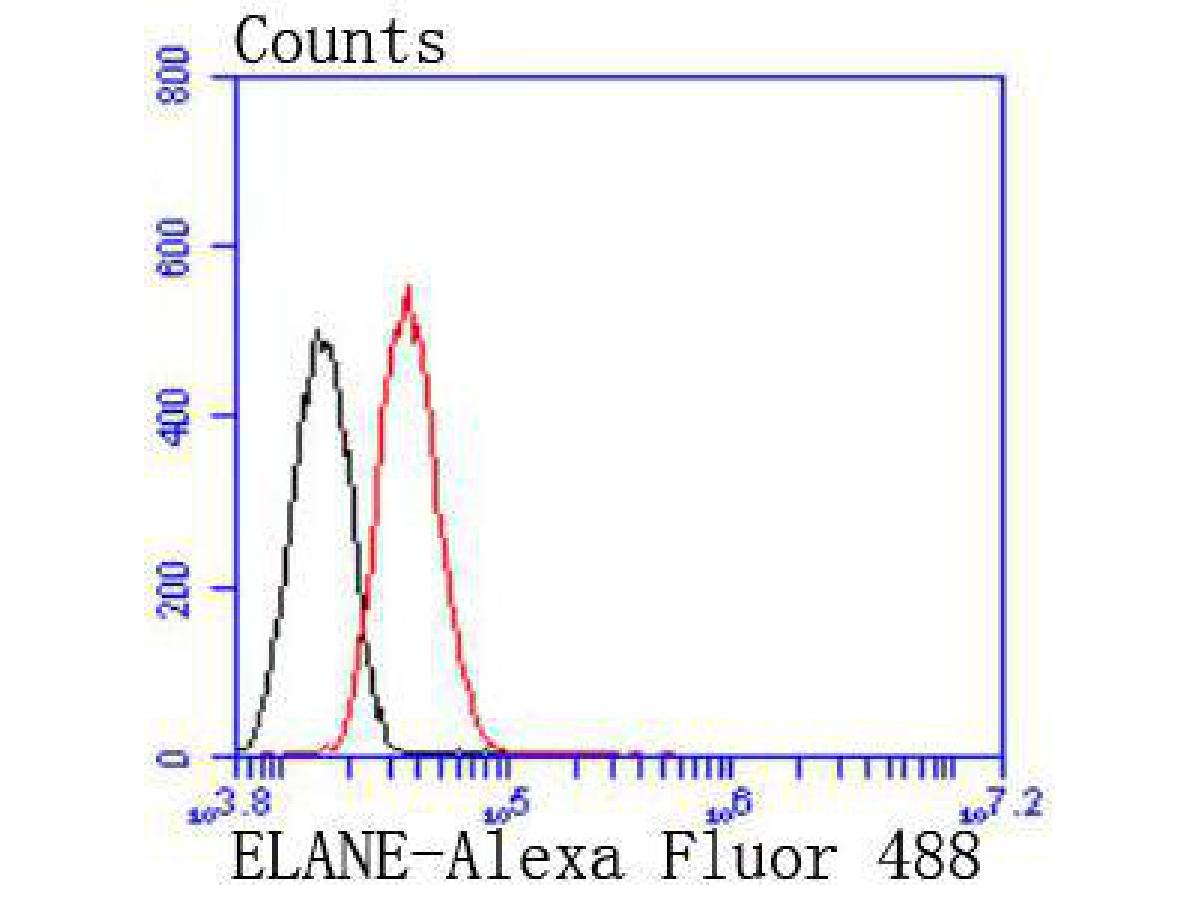 Flow cytometric analysis of Neutrophil Elastase was done on HepG2 cells. The cells were fixed, permeabilized and stained with the primary antibody (ET1702-78, 1/50) (red). After incubation of the primary antibody at room temperature for an hour, the cells were stained with a Alexa Fluor 488-conjugated Goat anti-Rabbit IgG Secondary antibody at 1/1000 dilution for 30 minutes.Unlabelled sample was used as a control (cells without incubation with primary antibody; black).