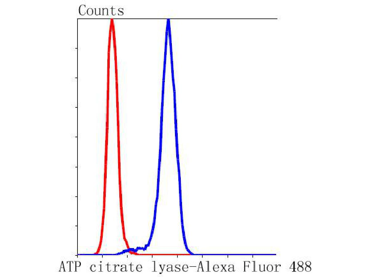 Flow cytometric analysis of ATP citrate lyase was done on Hela cells. The cells were fixed, permeabilized and stained with the primary antibody (ET1609-37, 1/200) (blue). After incubation of the primary antibody at room temperature for an hour, the cells were stained with a Alexa Fluor 488-conjugated Goat anti-Rabbit IgG Secondary antibody at 1/1000 dilution for 30 minutes.Unlabelled sample was used as a control (cells without incubation with primary antibody; red).