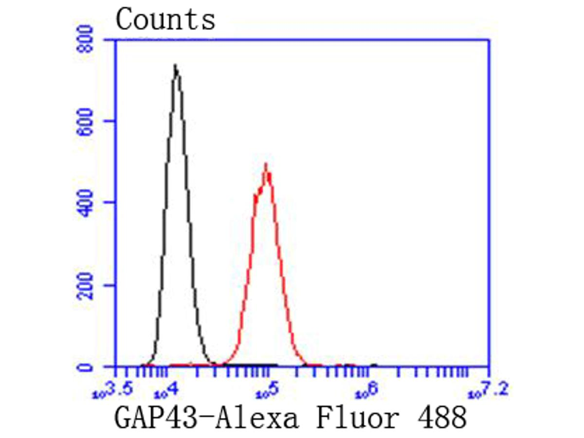 Flow cytometric analysis of GAP43 was done on SH-SY5Y cells. The cells were fixed, permeabilized and stained with the primary antibody (ET1610-94, 1/50) (red). After incubation of the primary antibody at room temperature for an hour, the cells were stained with a Alexa Fluor 488-conjugated Goat anti-Rabbit IgG Secondary antibody at 1/1000 dilution for 30 minutes.Unlabelled sample was used as a control (cells without incubation with primary antibody; black).