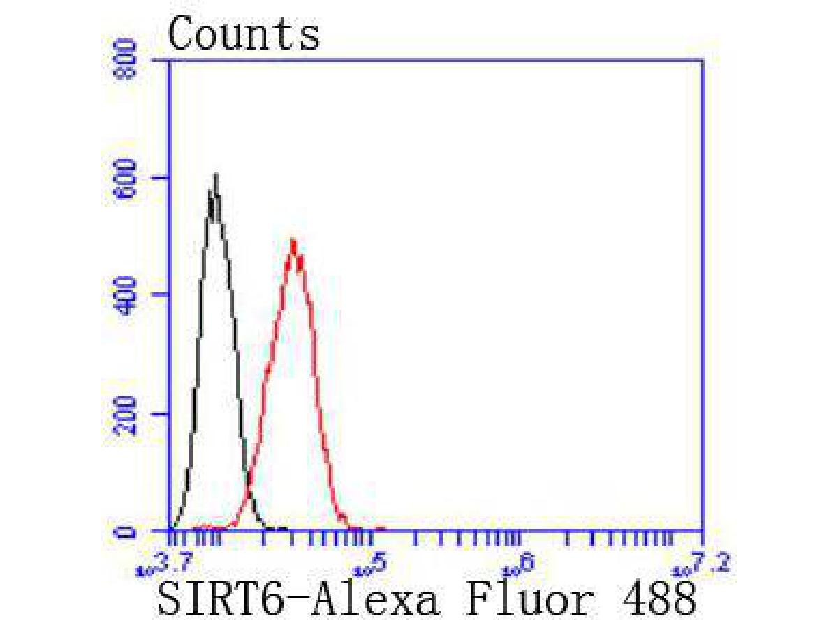 Flow cytometric analysis of SIRT6 was done on Hela cells. The cells were fixed, permeabilized and stained with the primary antibody (ET1701-29, 1/50) (red). After incubation of the primary antibody at room temperature for an hour, the cells were stained with a Alexa Fluor®488 conjugate-Goat anti-Rabbit IgG Secondary antibody at 1/1000 dilution for 30 minutes.Unlabelled sample was used as a control (cells without incubation with primary antibody; black).