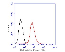 Flow cytometric analysis of PKM was done on F9 cells. The cells were fixed, permeabilized and stained with the primary antibody (ER1901-90, 1/50) (red). After incubation of the primary antibody at room temperature for an hour, the cells were stained with a Alexa Fluor 488-conjugated Goat anti-Rabbit IgG Secondary antibody at 1/1000 dilution for 30 minutes.Unlabelled sample was used as a control (cells without incubation with primary antibody; black).