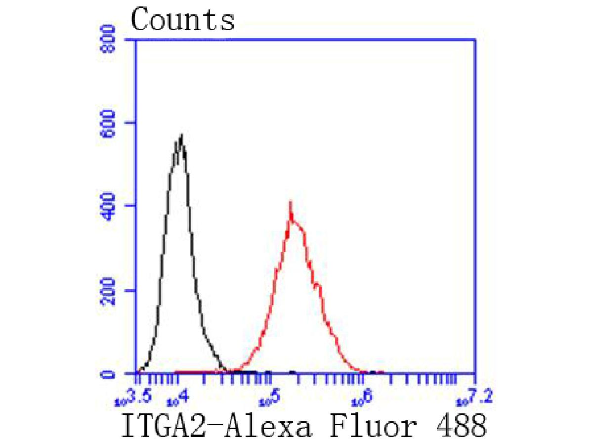 Flow cytometric analysis of Integrin alpha 2 was done on A431 cells. The cells were fixed, permeabilized and stained with the primary antibody (ET1611-57, 1/50) (red). After incubation of the primary antibody at room temperature for an hour, the cells were stained with a Alexa Fluor 488-conjugated Goat anti-Rabbit IgG Secondary antibody at 1/1000 dilution for 30 minutes.Unlabelled sample was used as a control (cells without incubation with primary antibody; black).