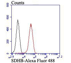 Flow cytometric analysis of 293T cells with SDHB antibody at 1/100 dilution (red) compared with an unlabelled control (cells without incubation with primary antibody; black). Alexa Fluor 488-conjugated goat anti-rabbit IgG was used as the secondary antibody.