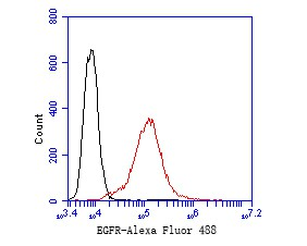 Flow cytometric analysis of EGFR was done on A431 cells. The cells were fixed, permeabilized and stained with the primary antibody (EM1901-67, 1/50) (red). After incubation of the primary antibody at room temperature for an hour, the cells were stained with a Alexa Fluor 488-conjugated Goat anti-Mouse IgG Secondary antibody at 1/1000 dilution for 30 minutes.Unlabelled sample was used as a control (cells without incubation with primary antibody; black).